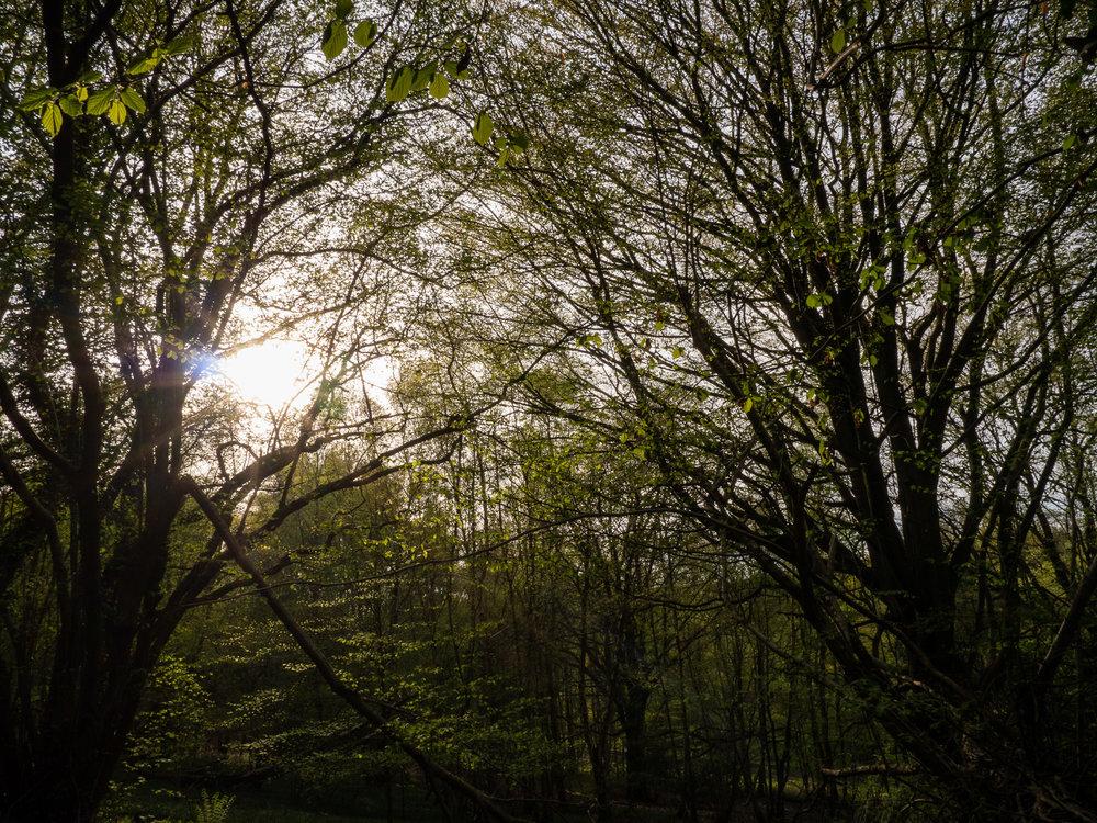 AngeloGifford-Landscape-1.jpg