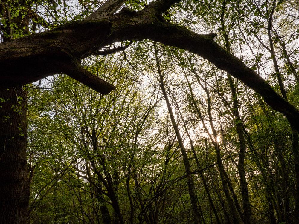 AngeloGifford-Landscape-2.jpg