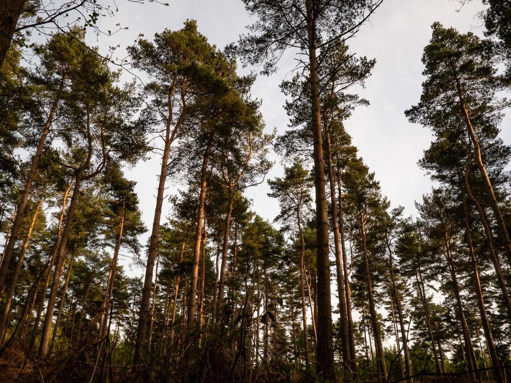 AngeloGifford-Landscape-3.jpg