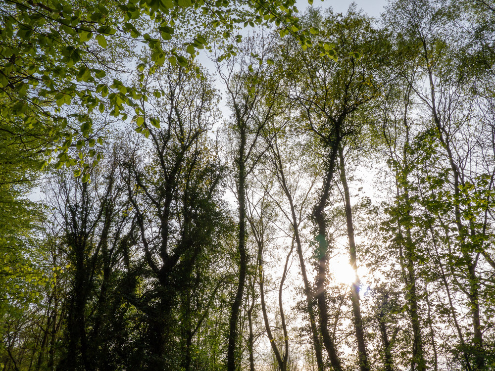 AngeloGifford-Landscape-4.jpg