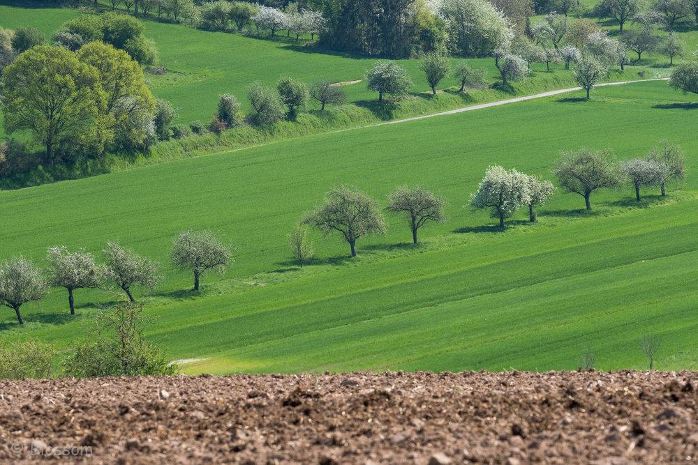 BlossSpink_06_Landscape.jpg