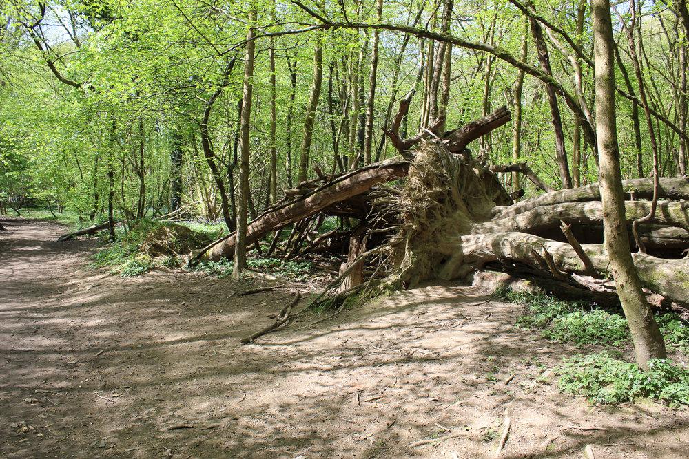 SharonNowell_8_Landscape_Fallen.jpg
