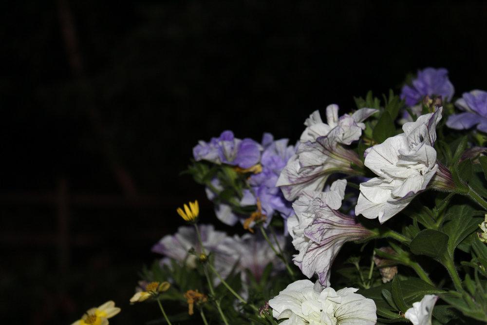 SharonNowell_05_Night Photography.jpg