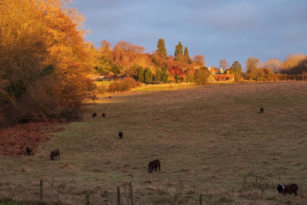 Gudge Meadow views