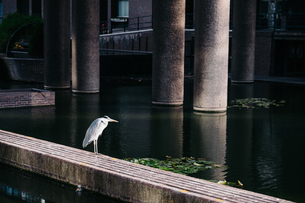 Heron at Barbican Centre © Andrew Newson