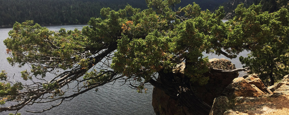 Tree_Placeholder.jpg