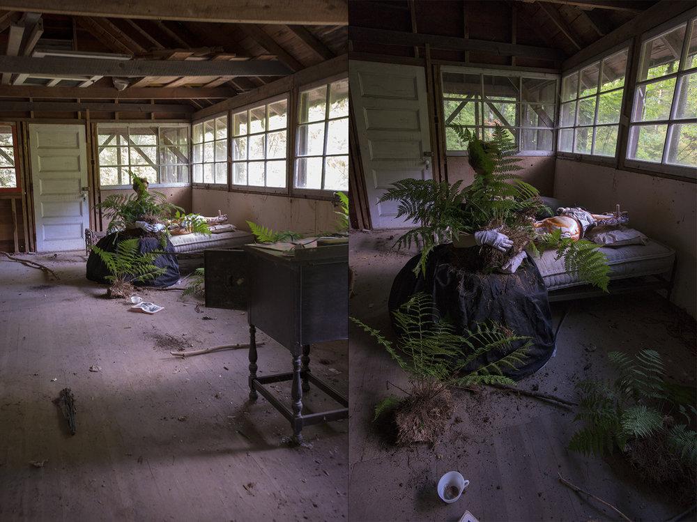 Ferns (Inside) - Diptych
