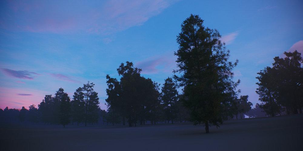 Tree Scene Alien Skies 07 Camera A.jpg