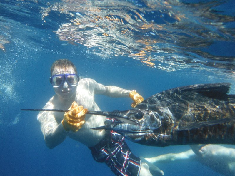 Ryan Bertsch helps revive a freshly released sailfish before it's release back to the ocean. Feb. 9, 2014