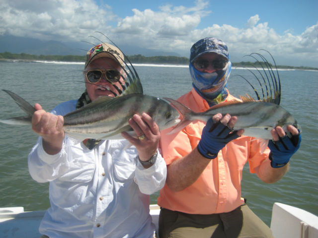 rooster fishing in quepos