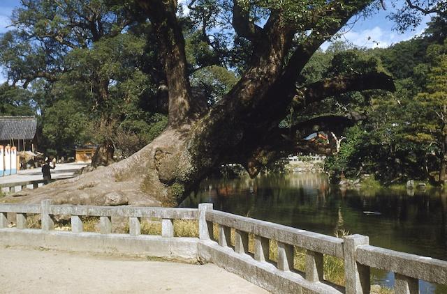 00.daizaifu(14b).jpg