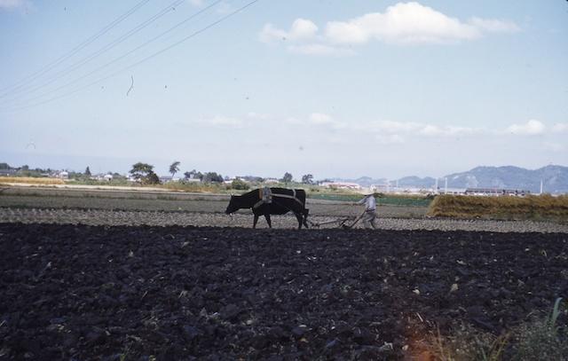 52.11.Itazjuke->Fukuoka.010.jpg