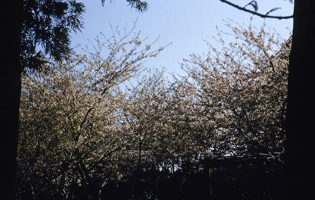 53.4.Oshima.005.jpg