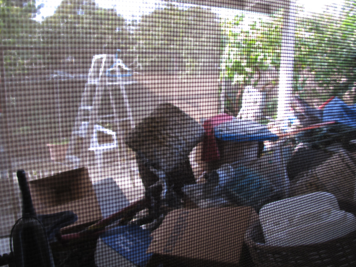 Jan 1st 2011   Through the screen door at my home in Temple City, California.