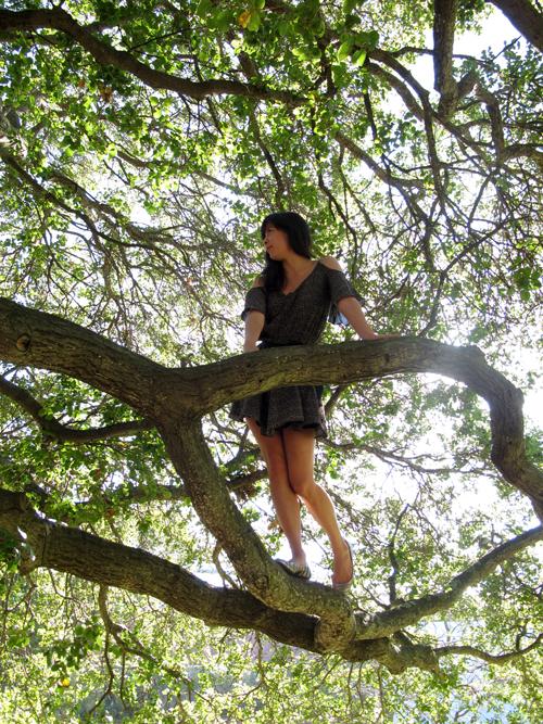 Jan 27th 2011   Tree Nymph