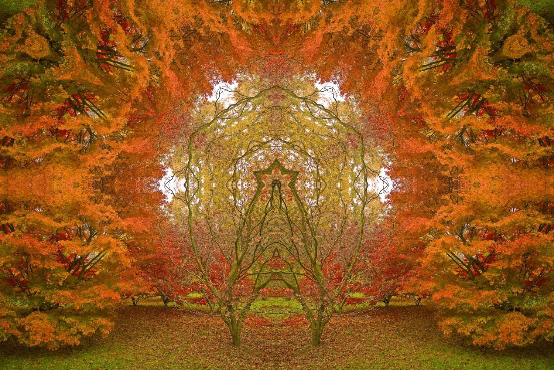 Autumn-Portal-2