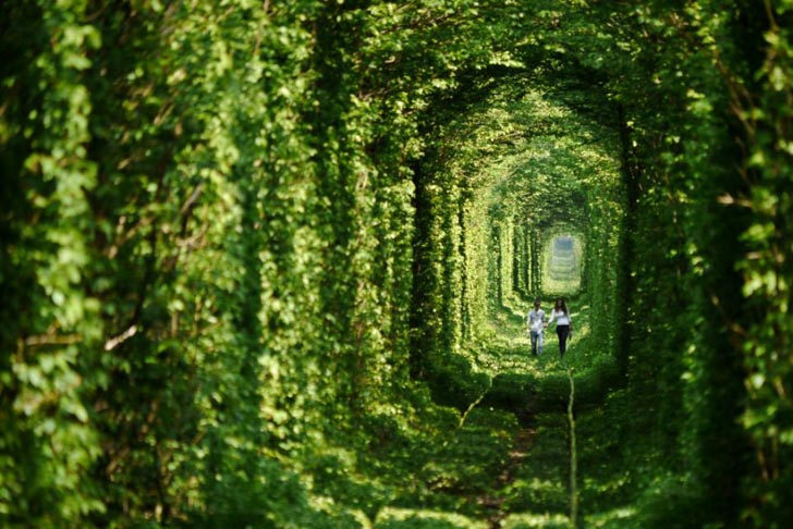 Garden-Tunnel