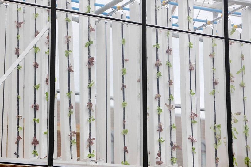growupbox-aqua-ponic-farm-london-designboom06