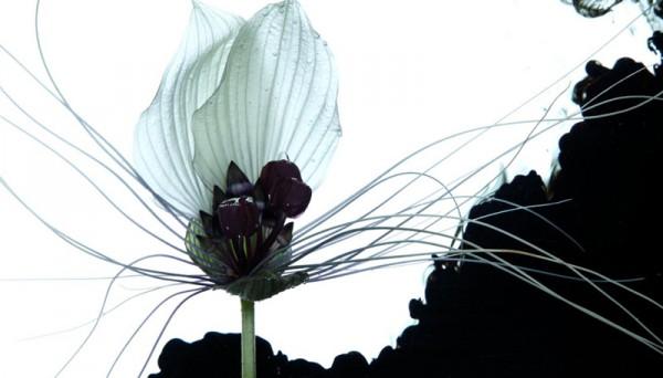 makoto-azuma-flowers-8-600x342