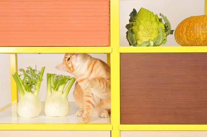 food storage2.jpg