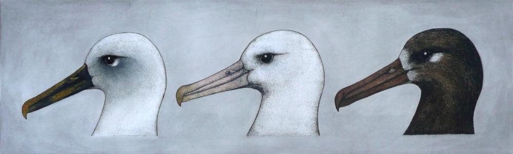 'Albatross Heads'