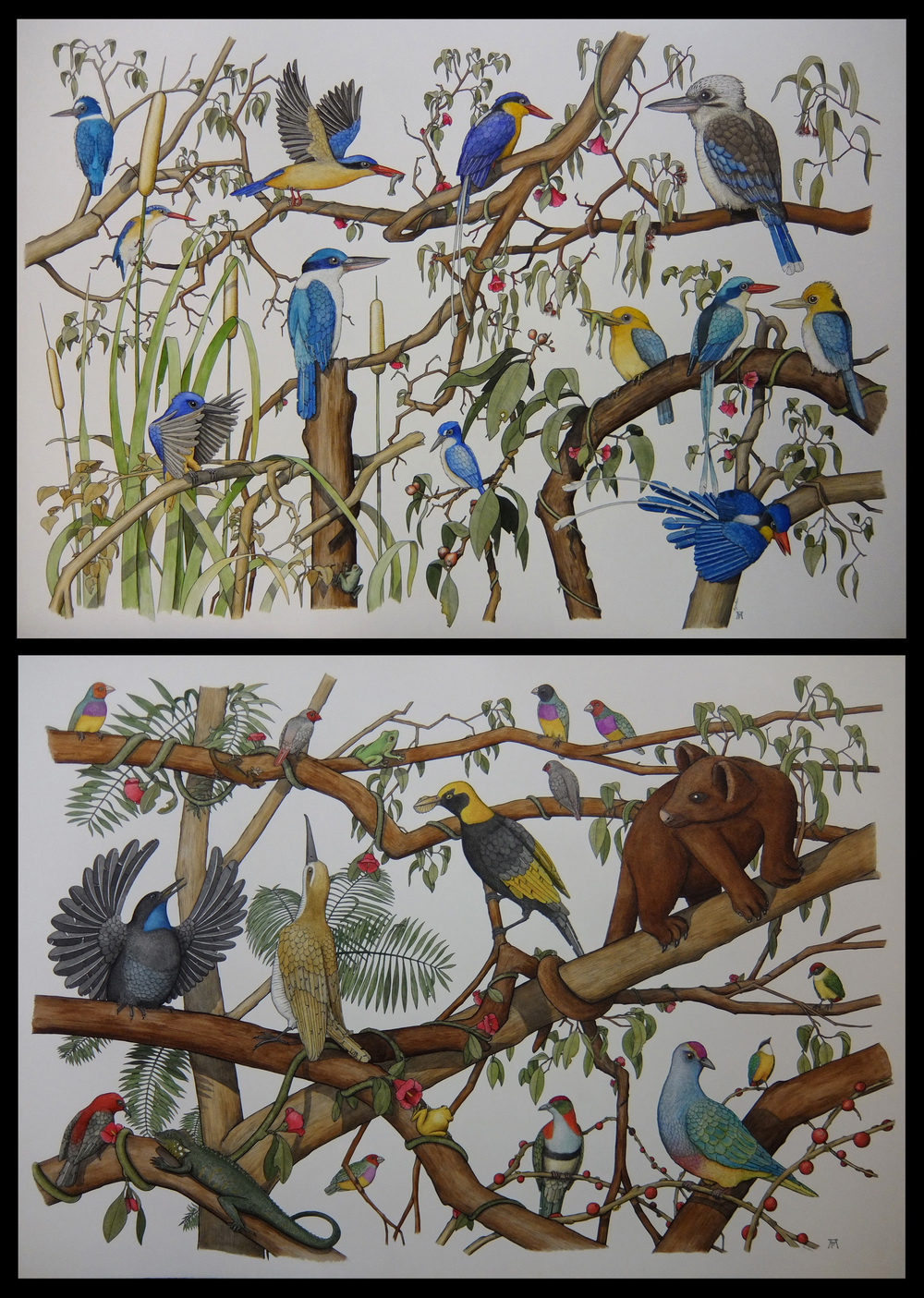 'Kingfishers of Northern Australia' (Ink Pen and Watercolour on Paper) Angus Fisher 'The Daintree Rainforest' (Ink Pen and Watercolour on Paper) Angus Fisher