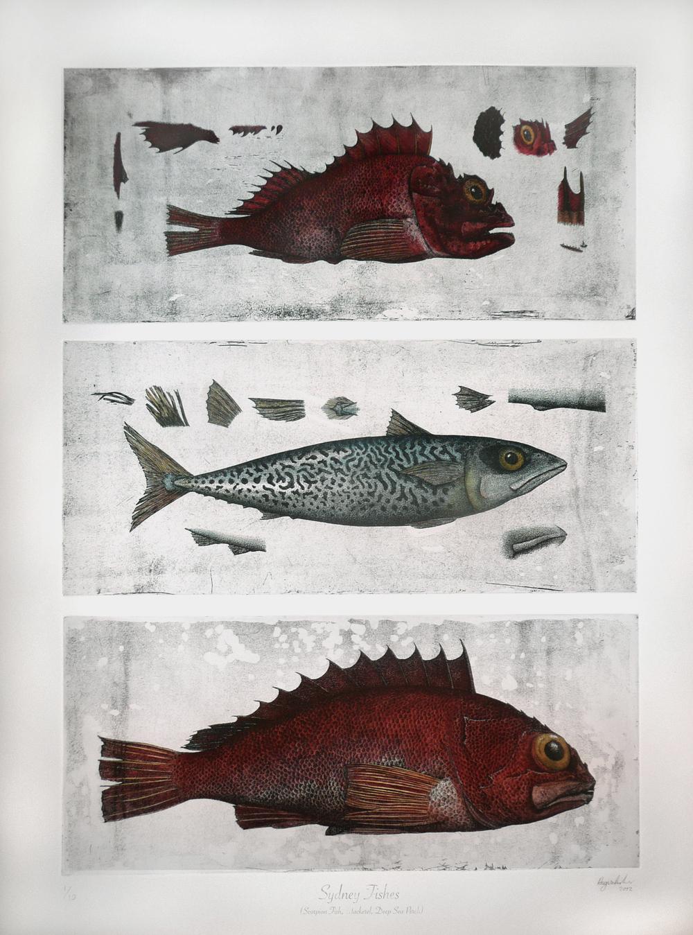 'Sydney Fishes'