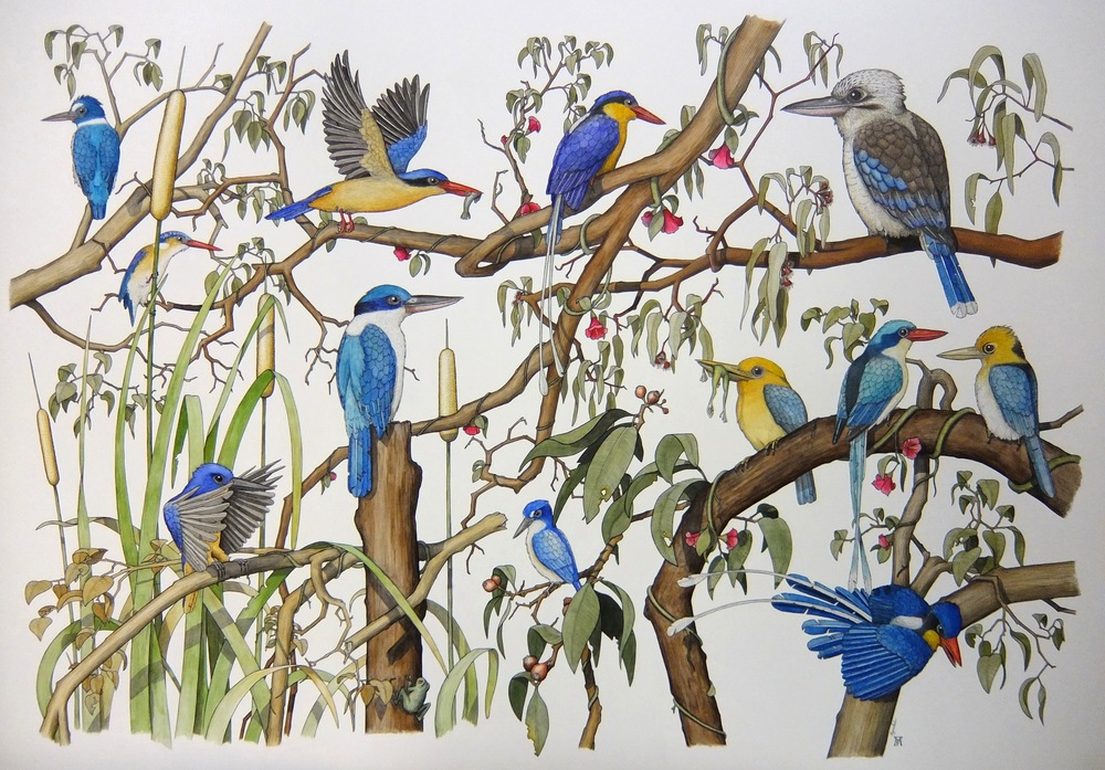 'Kingfishers of Northern Australia'