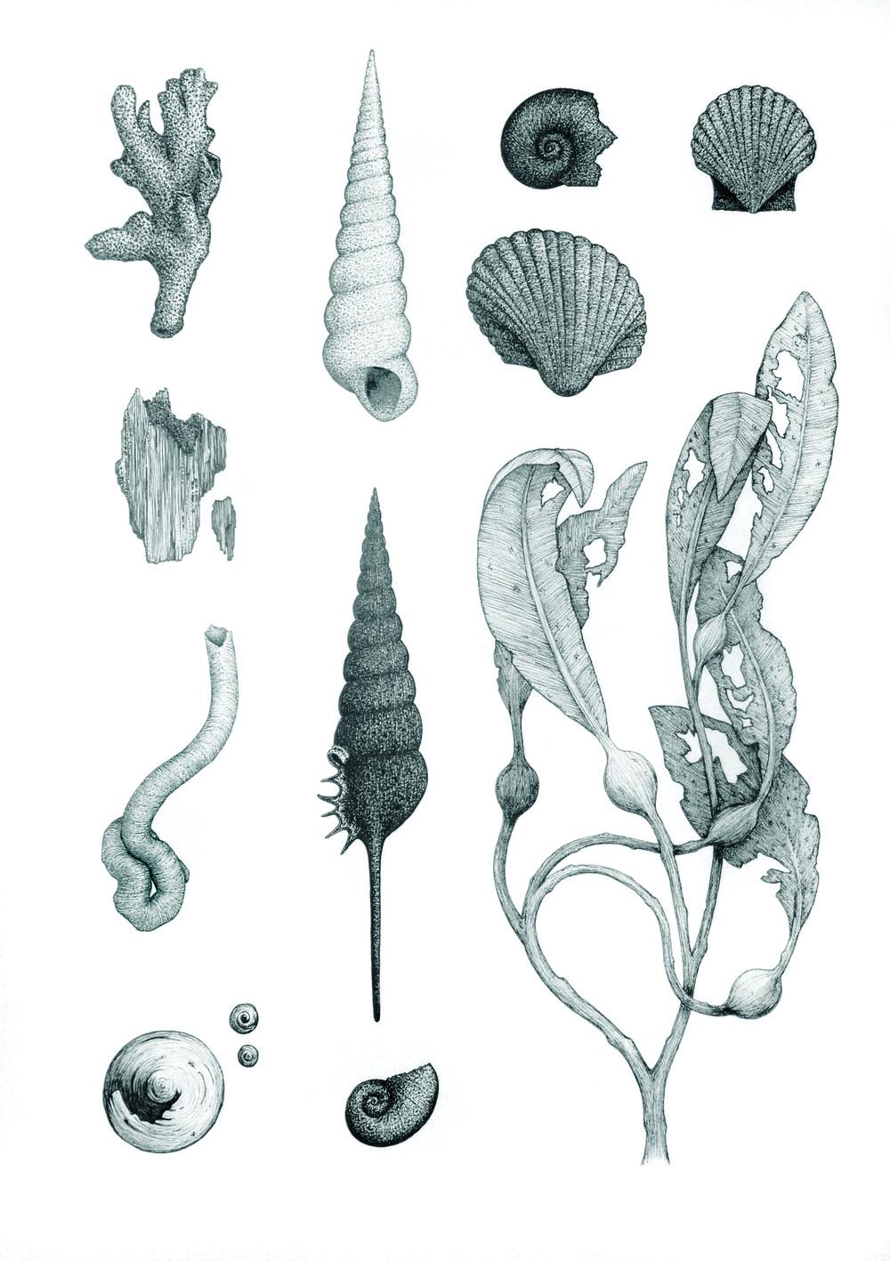 'Ocean Studies #1'