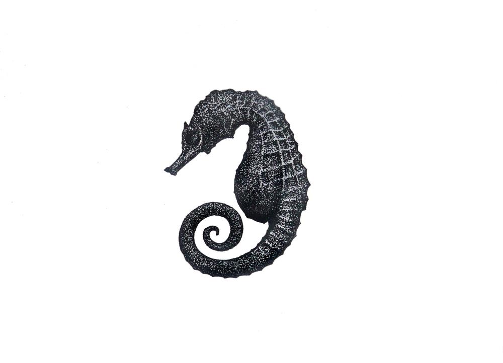 'Sea Horse'