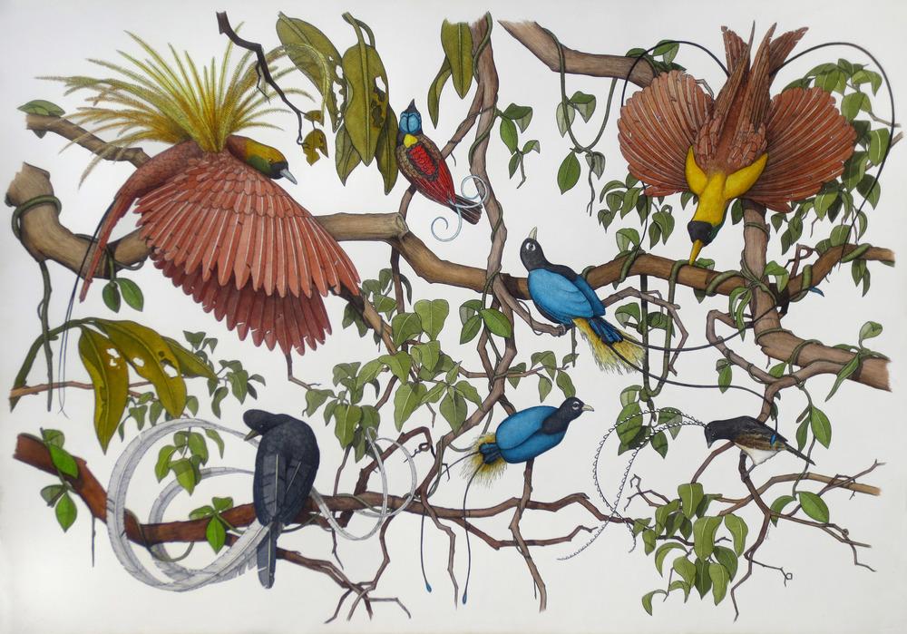 'The Birds of Paradise'