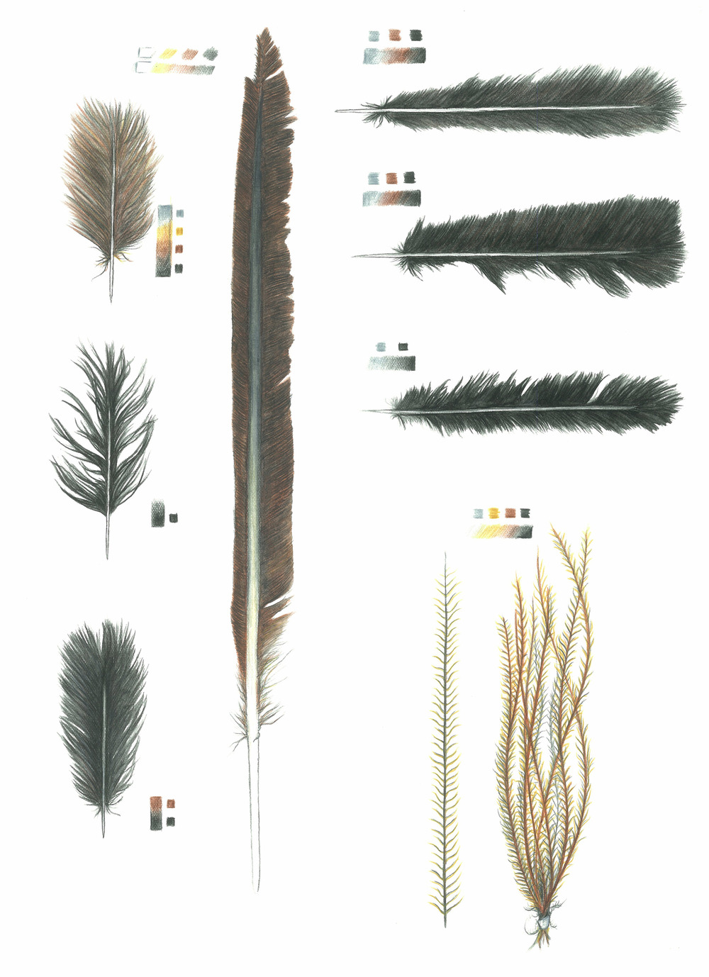 'Feather Studies #1'