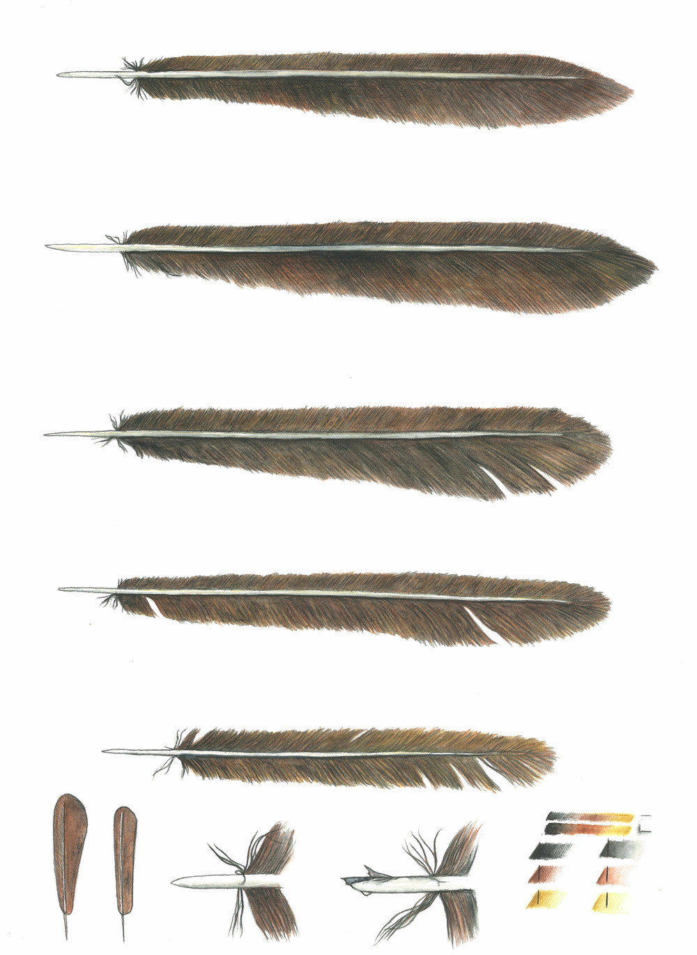 'Feather Studies #2'