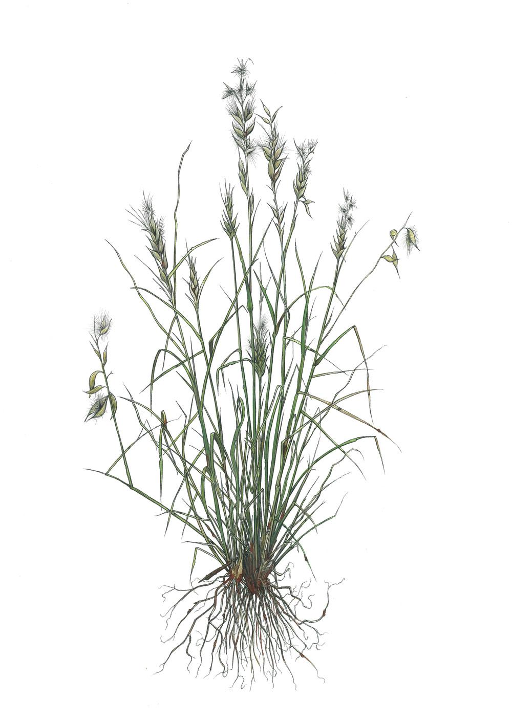 'Grass #2'