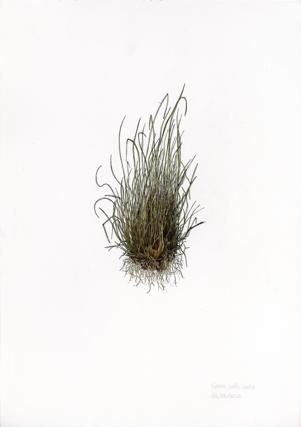 'Grass Root'