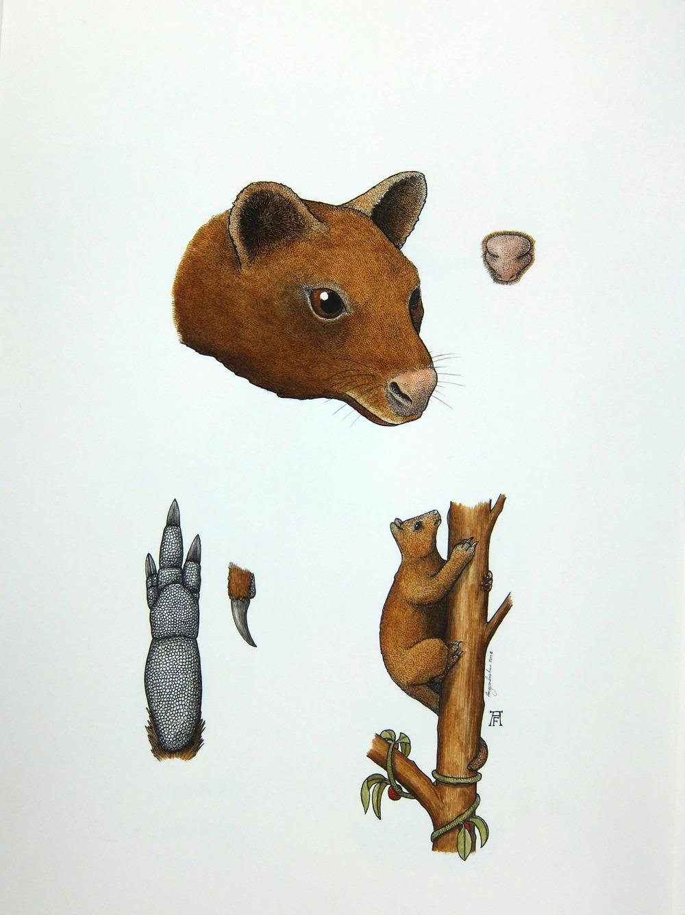 'Tree Kangaroo'
