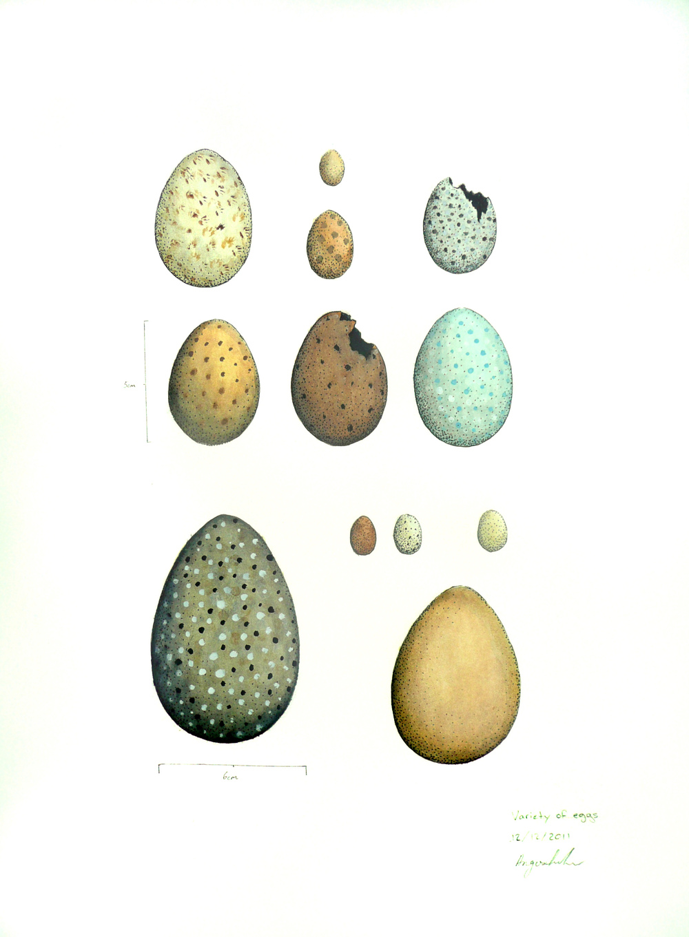 'Egg Collection'