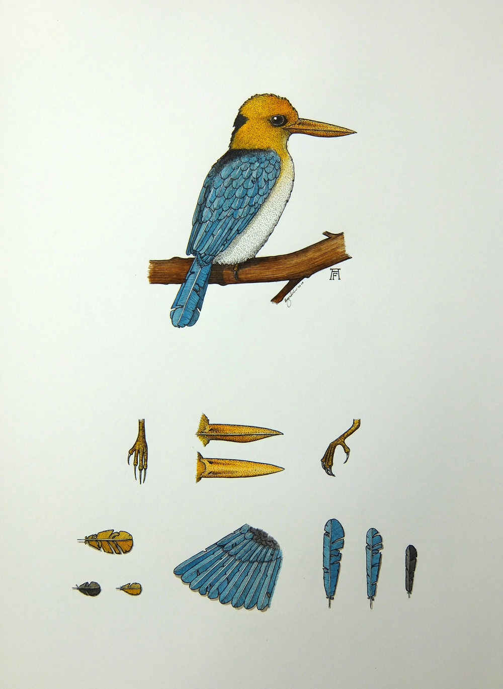 'Yellow-Billed Kingfisher'