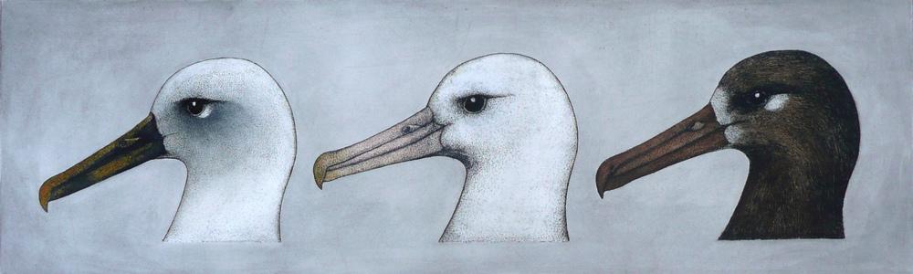 'Albatros Heads'