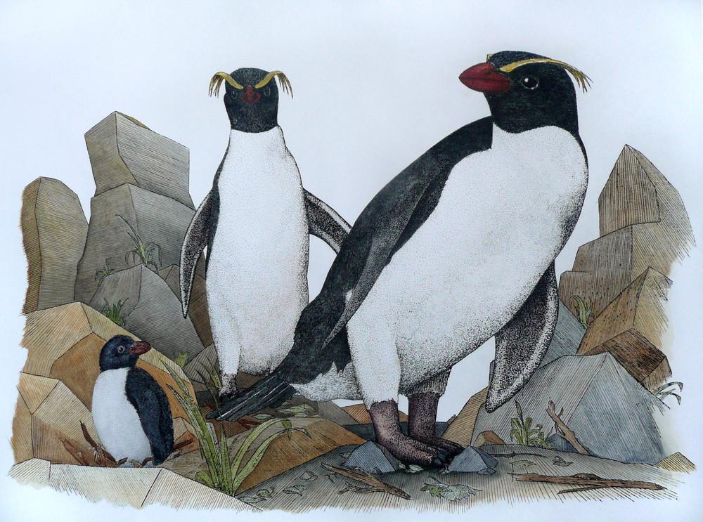'Fjordland Penguins'