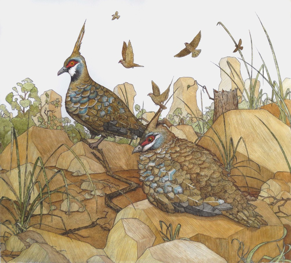 'Spinifex Pigeons'