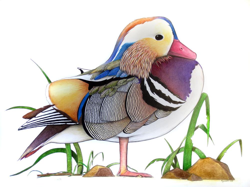 'Mandarin Duck'