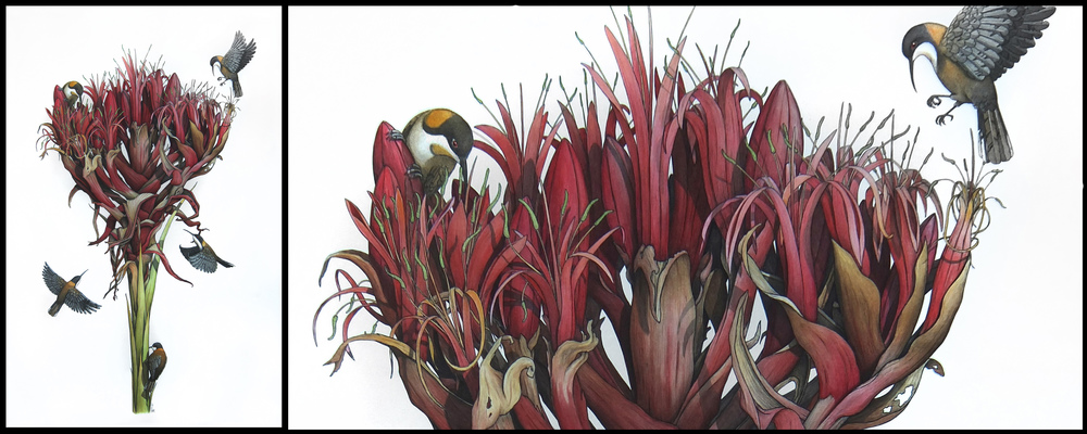'Gymea Lily with Eastern Spinebills' with detail (right) - Angus Fisher (2014)
