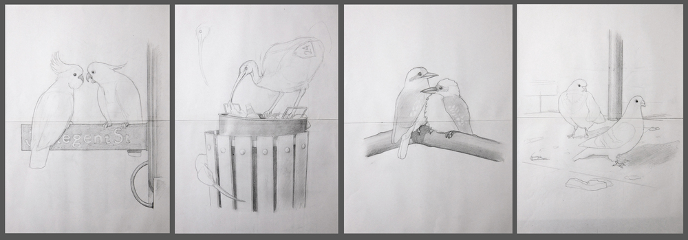 Initial sketches: The Sulphur-Crested Cockatoo, The Sacred Ibis, The Kookaburra and The Pigeon