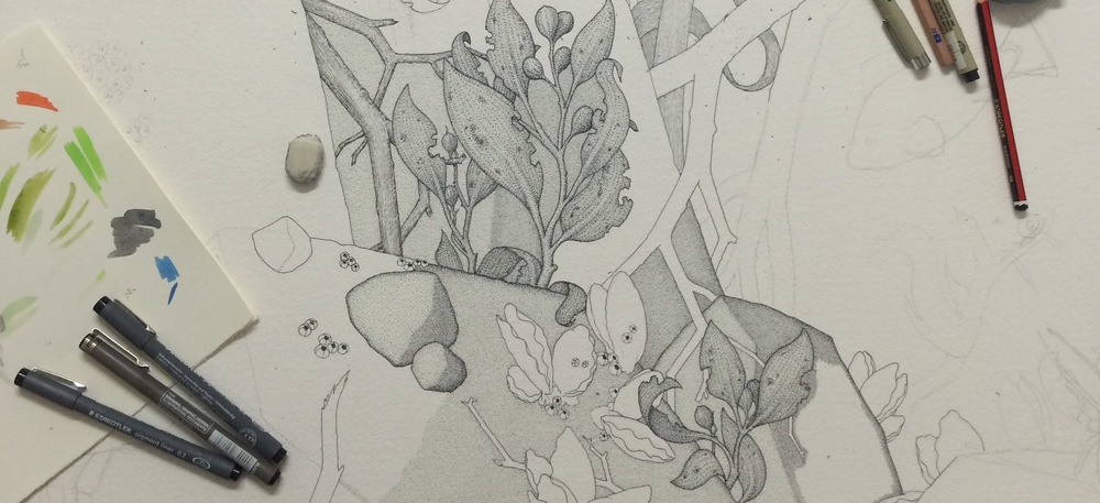 - Crop of the larger drawing showing some oysters and seaweed.