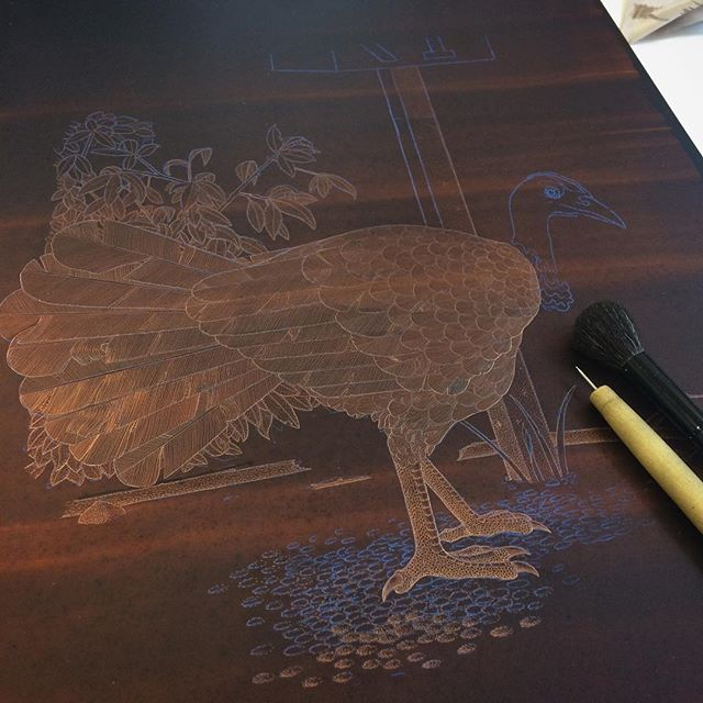 'Australian Brushturkey' etching in progress. #etching #printmaking #print #intaglio #copper #copperplate #hardground #brushturkey #bushturkey #turkey #bird #sydneybird #art #fineart #angusfisher