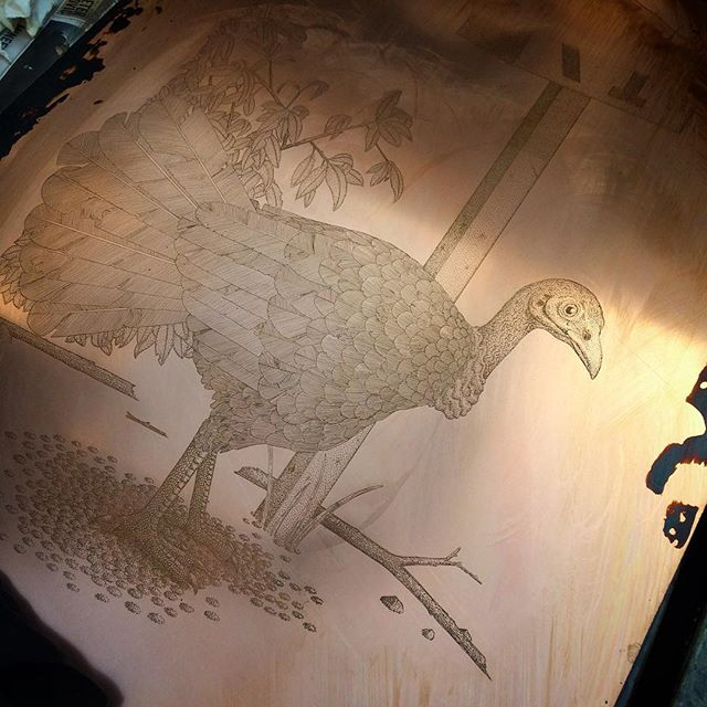 Cleaning the hard-ground off my latest etching 'Australian Brushturkey' after taking it out of the acid bath. Quite happy with how this one has turned out so far. #etching #print #printmaking #hardground #intaglio #etch #copper #australianbirds #brushturkey #bushturkey #sydneybird #bird #sydney #art #fineart #mfa #angusfisher