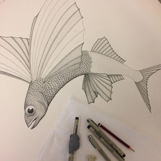 I started this drawing yesterday of a 'Flying Fish' alongside some diving birds. Feels good to get back to some drawing after focusing on printmaking for so long. I've been thinking about this one for a while, glad to get started on it. #drawing #pendrawing #pen #ink #fish #flyingfish #art #fineart #wip #angusfisher