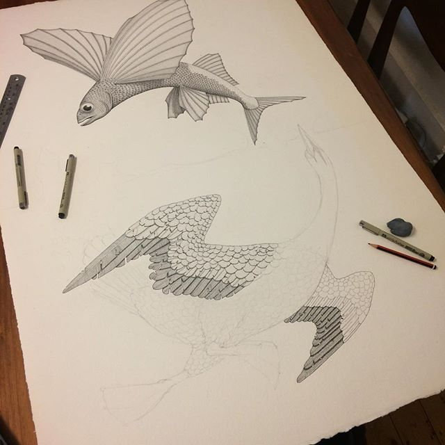 'Flying fish and Diving Birds' Ink pen on paper. A few days in and pretty happy with how this is starting to come together. After I finish all the pen work I'm planning on adding some colour with washes of watercolour paint over the top. #fish #flyingfish #bird #divingbird #gannet #ocean #drawing #inkdrawing #pendrawing #watercolur #watercolor #art #fineart #wip #angusfisher