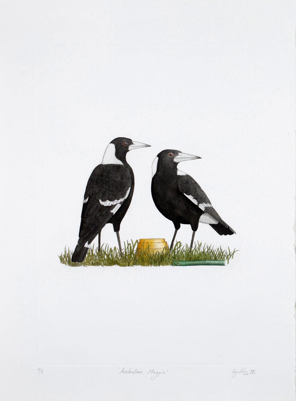 'Australian Magpie'